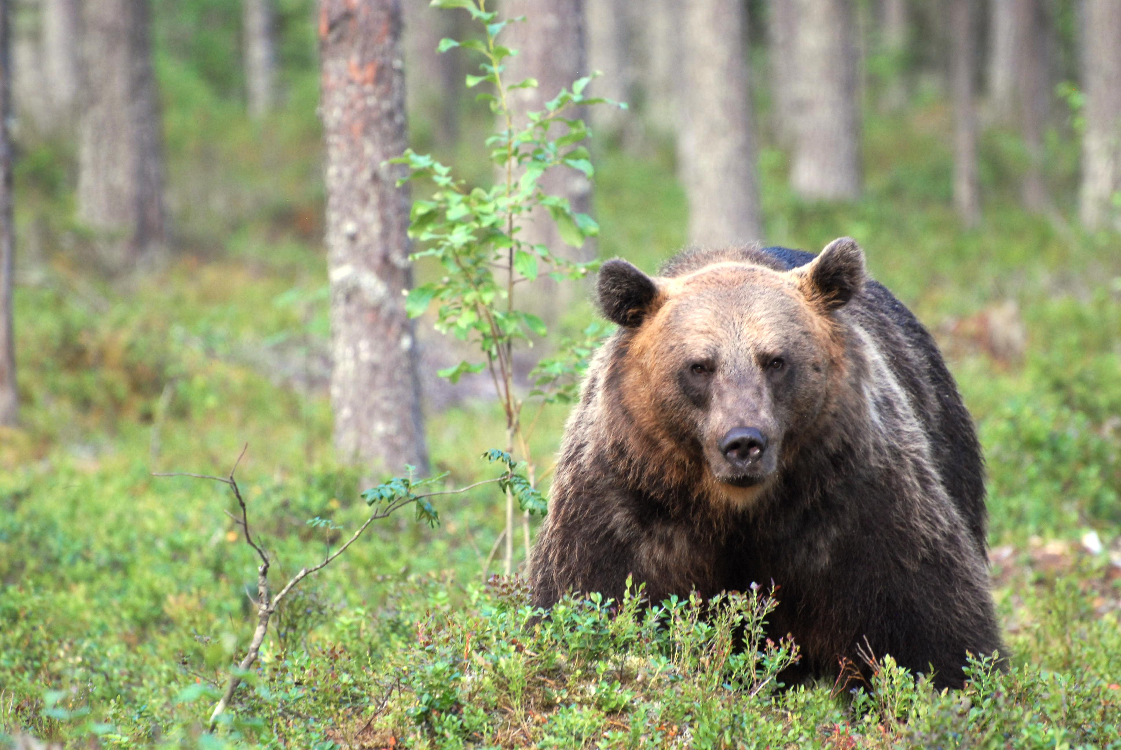 Karhu Jälki