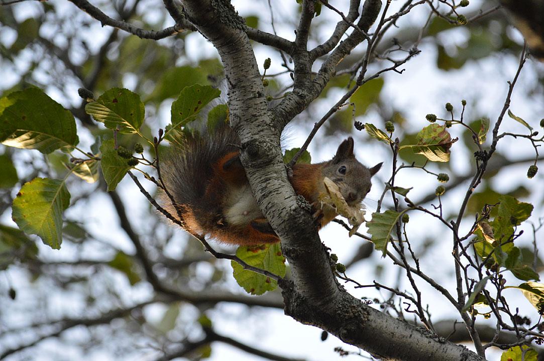 Oravan Metsästys