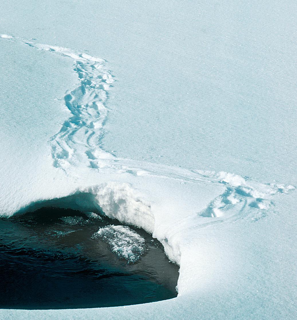Saukon Jäljet Lumessa