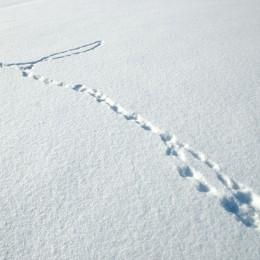 Lumikon Jäljet Lumessa